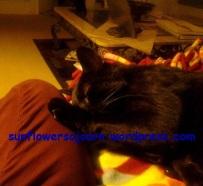 benny-cuddle-2